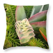 Pretty Succulents Throw Pillow