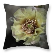 Prickly Pear Blossom 3 Throw Pillow by Roger Snyder