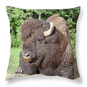 Prim And Proper Bison Throw Pillow
