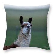 Priscilla Closeup #1 Throw Pillow