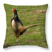 Private Pheasant Throw Pillow