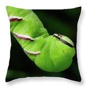 Privet Hawk Moth Caterpillar Throw Pillow