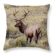 Prize Bull Elk Throw Pillow