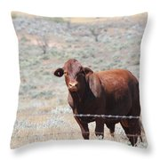 Proby's Cow Throw Pillow