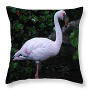 Profile Of A Pink Lesser Flamingo Throw Pillow