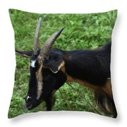 Profile Of A Pygmy Goat In A Farm Field Throw Pillow