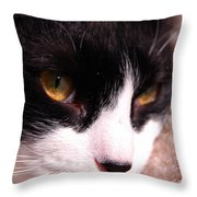Profile Of Paws Throw Pillow