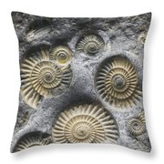 Promicroceras Planicosta, Early Throw Pillow