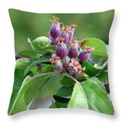 Promise Of Apples To Come Throw Pillow