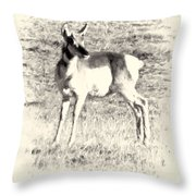 Pronghorn Angelope Throw Pillow