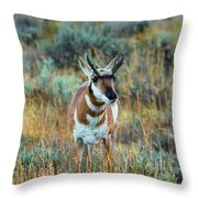 Pronghorn Antelope Amid Fall Foliage Wyoming Throw Pillow