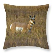 Pronghorn At Golden Hour Throw Pillow