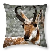 Pronghorn Buck In Snow - Yellowstone National Park Throw Pillow