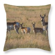 Pronghorn Fawns And Their Mothers Throw Pillow