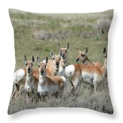 Pronghorn Harem Throw Pillow