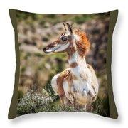 Pronghorn Mother Throw Pillow