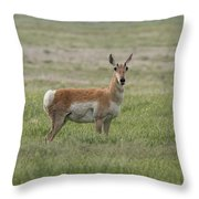 Pronghorn On The Plains Throw Pillow