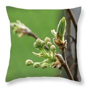 Prosperity Is Welcomed Throw Pillow