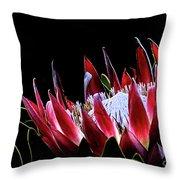 Protea 1 Throw Pillow