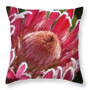 Protea Bloom Throw Pillow