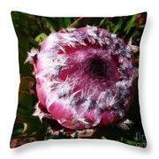 Protea Flower 1 Throw Pillow