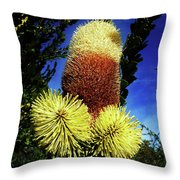 Protea Flower 5 Throw Pillow