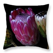 Proteas Throw Pillow