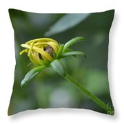 Protection From The Elements Throw Pillow