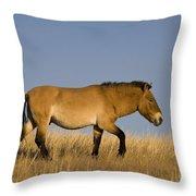 Przewalskis Stallion Throw Pillow