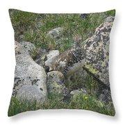 Ptarmigan Throw Pillow