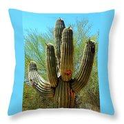 Pueblo Museum 7 Throw Pillow
