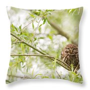 Puffed Up Little Owl In A Willow Tree Throw Pillow