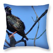 Puffed Up Starling Throw Pillow