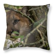 Puma Stalking Throw Pillow