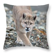 Puma Walk Throw Pillow