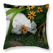 Puppies Exploring Throw Pillow