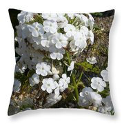 Pure Beauty Throw Pillow