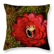 Pure Red  Throw Pillow