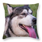 Purebred Alaskan Malamute Tongue Throw Pillow