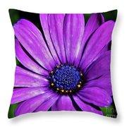 Purple African Daisy Throw Pillow