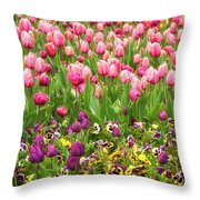 Purple And Pink Tulips In Canberra In Spring Throw Pillow