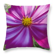 Purple And White Cosmos Throw Pillow
