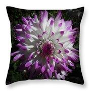 Purple And White Dahlia Throw Pillow