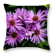 Purple Aster Blooms Throw Pillow