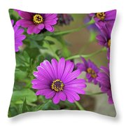 Purple Aster Flowers Throw Pillow