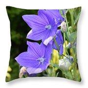 Purple Balloon Flower Throw Pillow