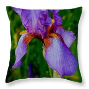 Purple Bearded Iris Portrait Throw Pillow