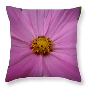 Purple Beauty Throw Pillow