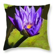 Purple Biltmore Lily  Throw Pillow