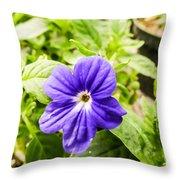 Purple Browallia Flower Throw Pillow